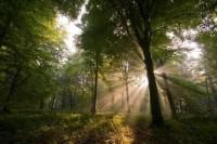foret arbre