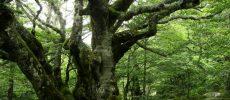Figures de Parc – Le concours forestier « SylvoTrophée »
